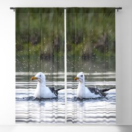 Gull bathing and showering Blackout Curtain