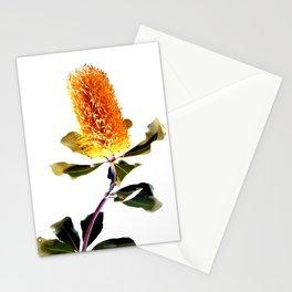 Beautiful Australian Banksia Flower Stationery Cards