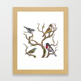 Four Songbirds Framed Art Print