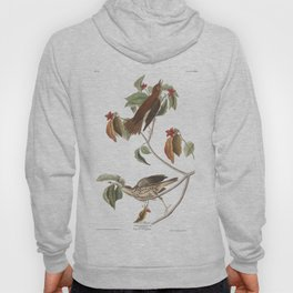Wood thrush, Birds of America, Audubon Plate 73 Hoody
