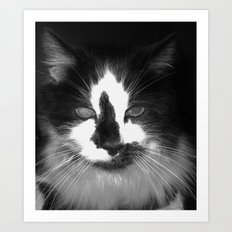Blott - Kitty Cat II Art Print