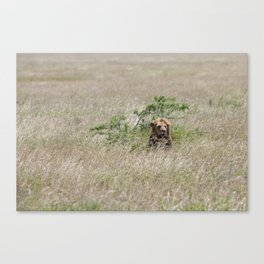 A male lion in The Serengeti Canvas Print