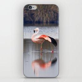 Chilean Flamingo (Phoenicopterus chilensis) iPhone Skin