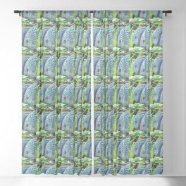 Turquoise Blue Discus Sheer Curtain