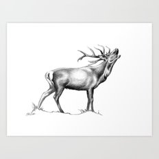 Red Stag Roaring 2 Art Print