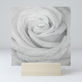 Single white rose close up Mini Art Print