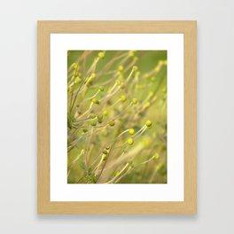dancing in the sunlight Framed Art Print
