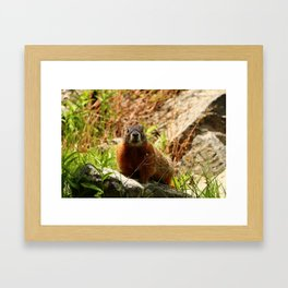 Marmot On A Rock Framed Art Print