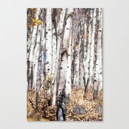 Aspen Trees In Autumn Canvas Print