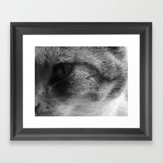 Kitty Kat Framed Art Print