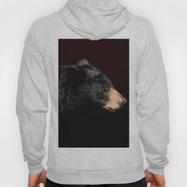Young Black Bear Portrait Hoody