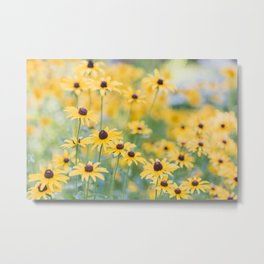 Sunny Disposition - Field of Wildflowers Photography Metal Print