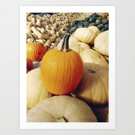 Freshly picked assortment of fall pumpkins and squash Art Print