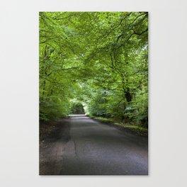Summer Beech Canopy 1 Canvas Print
