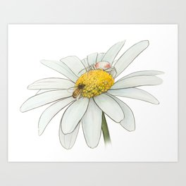 Crab Spider Art Print