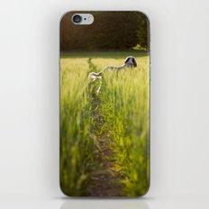 Brown Roan Italian Spinone iPhone & iPod Skin