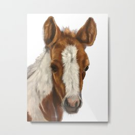 Pony mini horse Metal Print