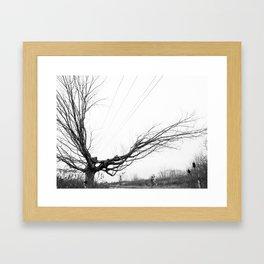 Between the lines: Nature vrs Human Framed Art Print