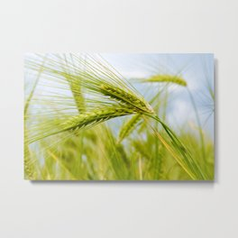 Green Grass Metal Print