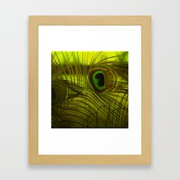Peacock Feather Framed Art Print