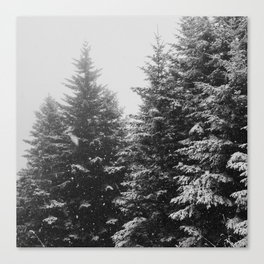 The Pine Tree Forest (Black and White) Canvas Print