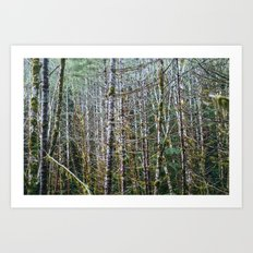 Trees: I // Oregon Art Print