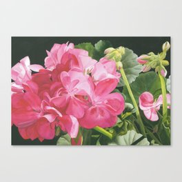 Loves Folly - Geraniums Canvas Print