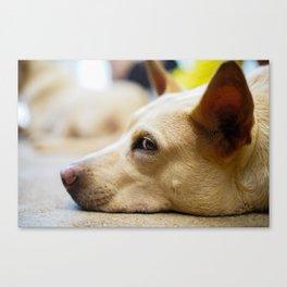 Ears Up! Canvas Print