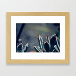 Spiders & Succulents Framed Art Print