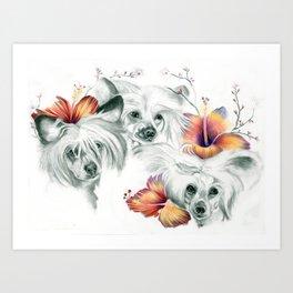 Chinese Roses Art Print