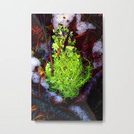 Lichen Metal Print