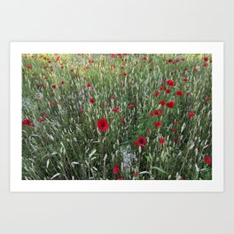 Poppy field, Summer greetings Art Print
