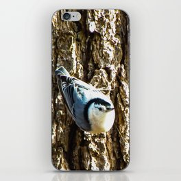 Nosey Nuthatch iPhone Skin