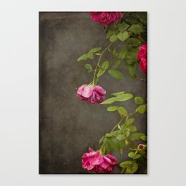 Pink On Gray Canvas Print