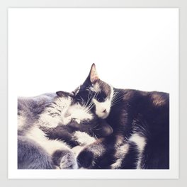 Cats again Art Print