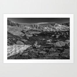 Mountain Goat at Twin Lakes Art Print