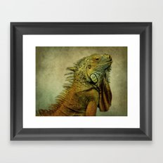 Green Iguana Framed Art Print