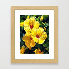 Yellow Hibiscus #18 Framed Art Print