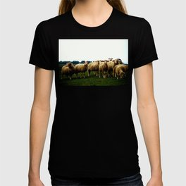 Sheep on a Grassy Hill T-shirt