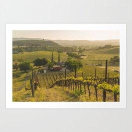 Vineyard Sunset Art Print