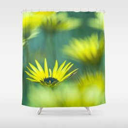 The beauty of yellow daisies II Shower Curtain