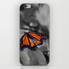 Monarch BW iPhone & iPod Skin