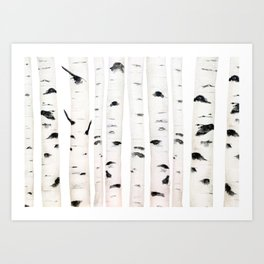 birch horizontal Art Print