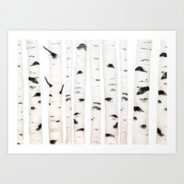 birch horizontal Art Print