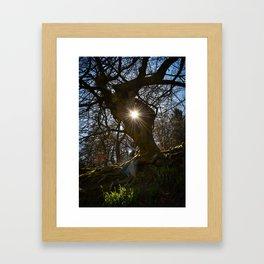 Tree Portal Framed Art Print