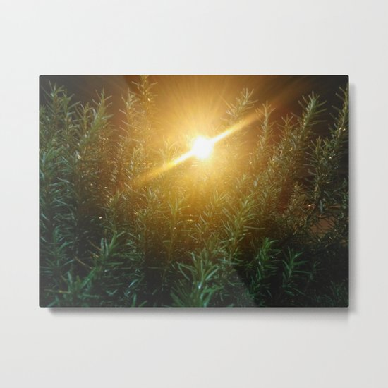 Rosemary Sunrise Metal Print