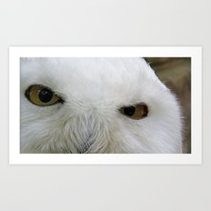 Keen look of the snow owl Art Print