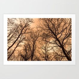 Naked trees and cloudy sunset sky Art Print