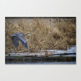 Flight of the Heron No. 2 Canvas Print