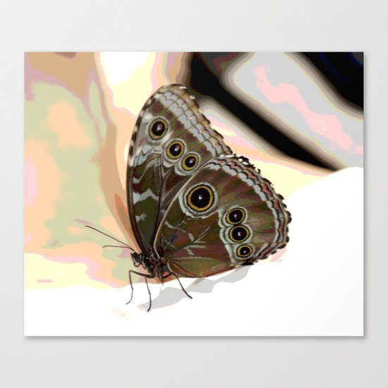 Bulls Eye Butterfly Canvas Print